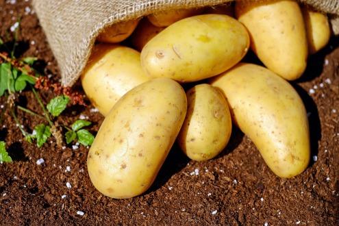 Tortino patate, zucca e feta7