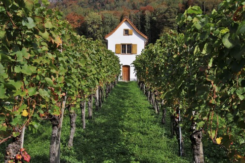 wine revolution3