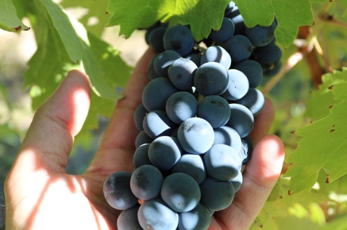 wine revolution5