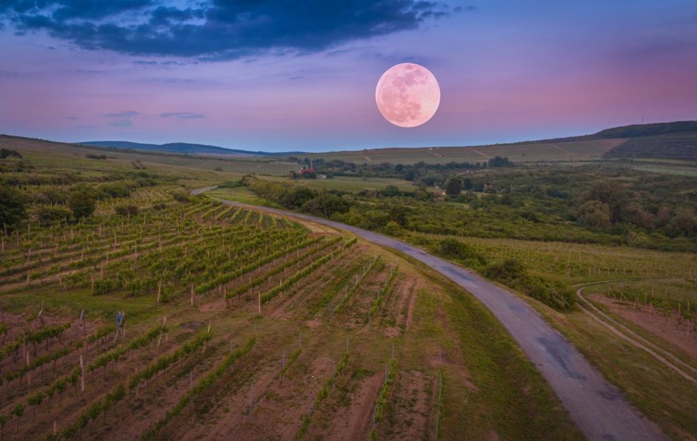 La luna e il vino