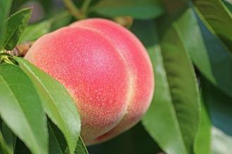 peach-2721852_960_720
